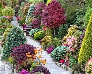 Декоративные кустарники для сада фото с названиями
